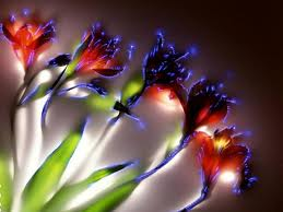 plant aura